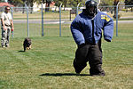 Travis SFS Military Working Dog handlers 150326-F-OH435-057.jpg