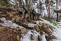 Tree Roots In Vozdvizensky Forrest.jpg