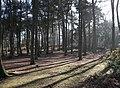 Trees (16447211816).jpg