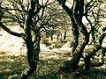 Trees - panoramio (29).jpg