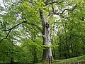 Trees in Geilston Gardens - geograph.org.uk - 31953.jpg