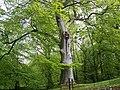 Trees in Geilston Gardens - geograph.org.uk - 31953.jpg