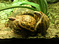 Turtle sex.jpg