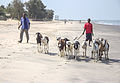 Two shepherds with a herd of goats in the Gambia.jpg