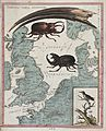 Two stag beetles crawling over a map of the world underneath Wellcome V0022824.jpg