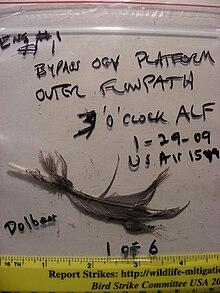 Photo d'un sac de preuves contenant une plume retrouvée dans le moteur de l'avion. Le sac contient également plusieurs inscriptions indiquant sa provenance.
