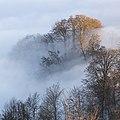 Uetliberger wald im nebel.jpg