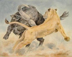 Uli Aschenborn - Image: Uli Aschenborn Buffalo attacking lioness