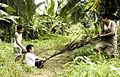 Upih pinang fun (cropped).jpg