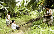 A boy sits on a large leaf that is pulled by an older boy. Another boy looks at them.