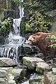 Ursus arctos middendorffi - Dierenpark Emmen.JPG