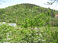 Východní Bohdalec z Tyršova vrchu přes průkop.jpg