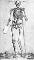 "Valverde de Hamusco ""Anatomie""; skeleton Wellcome L0002518.jpg"