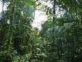 Vegetación de la Reserva de la Biosfera La Amistad Panama (RBLAP) 43.JPG
