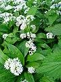 Verge flowers 6.JPG