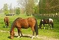 Versailles Horses (5986786925).jpg