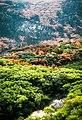 Victoria Wilsons Promontory National Park (post fires).jpg