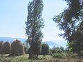 View of the Prespa Lake.jpg
