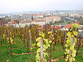 View over Prague from Prague Castle with vineyards.jpg