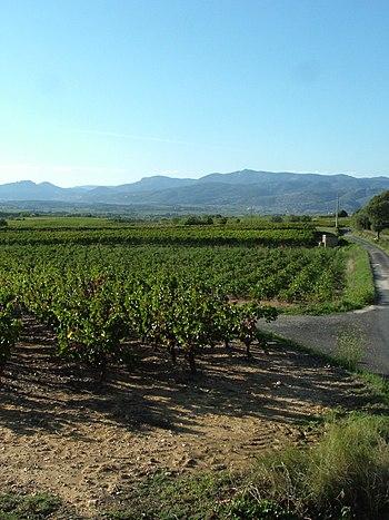 Français : Vignoble du mas de Daumas-Gassac