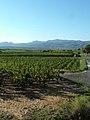 Vignoble de Daumas-Gassac.jpg