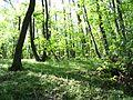 Vršašor, granica sa Rumunijom - panoramio.jpg
