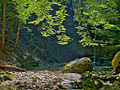 Waldbach (1160935670).jpg