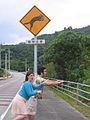 Warning signs for Iriomote cat2.jpg