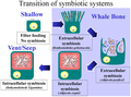 Whale carcasses and the evolution of symbiostic Mytilid mussels.png