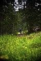 Where's Waldo (10698890395).jpg