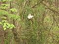 White Squirrel NC.jpg
