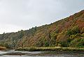 Whittacliffe Wood.jpg