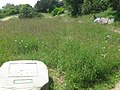 Wildflower Meadow in Lower Leas Country Park - geograph.org.uk - 1355483.jpg