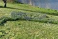 Wilhelminapark, Breda P1360780.jpg