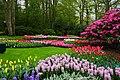 Wiosenny ogród Keukenhof w Lisse-Holandia. - panoramio (11).jpg