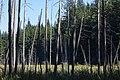 Woodhaven Swamp (121423827).jpeg