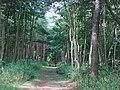Woodland, Dalmeny - geograph.org.uk - 34588.jpg