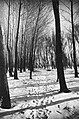 Woods, winter, snow Fortepan 28197.jpg