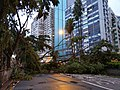 Yee Wo Street in Hong Kong - Fallen Trees due to Typhoon Mangkhut 2018.jpg