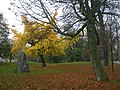 Yellow tree in Maastricht park - panoramio.jpg