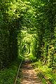 """""""Тунель кохання"""" м.Клевань.jpg"""