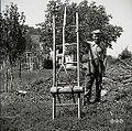 """""""Vile za sno krvi u lojtrih"""" (s pomočjo kosa lesa """"punta""""), Lozice 1958.jpg"""