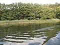 +20180611Müritz-Nationalpark.Blick von der Müritz zum Nationalpark.-085.jpg