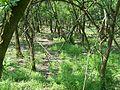 Állat ösvény - panoramio.jpg
