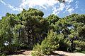 Δάσος Καλόγριας 17.jpg
