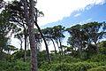 Δάσος Καλόγριας 29.jpg