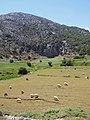 Πρόβατα στο Οροπέδιο Λασιθίου 3227.jpg
