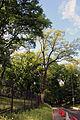 Байкова гора 07.JPG