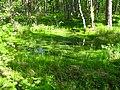 Болото на Шокшинском полуострове - panoramio.jpg