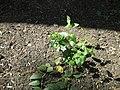 Весняна квітка.jpg